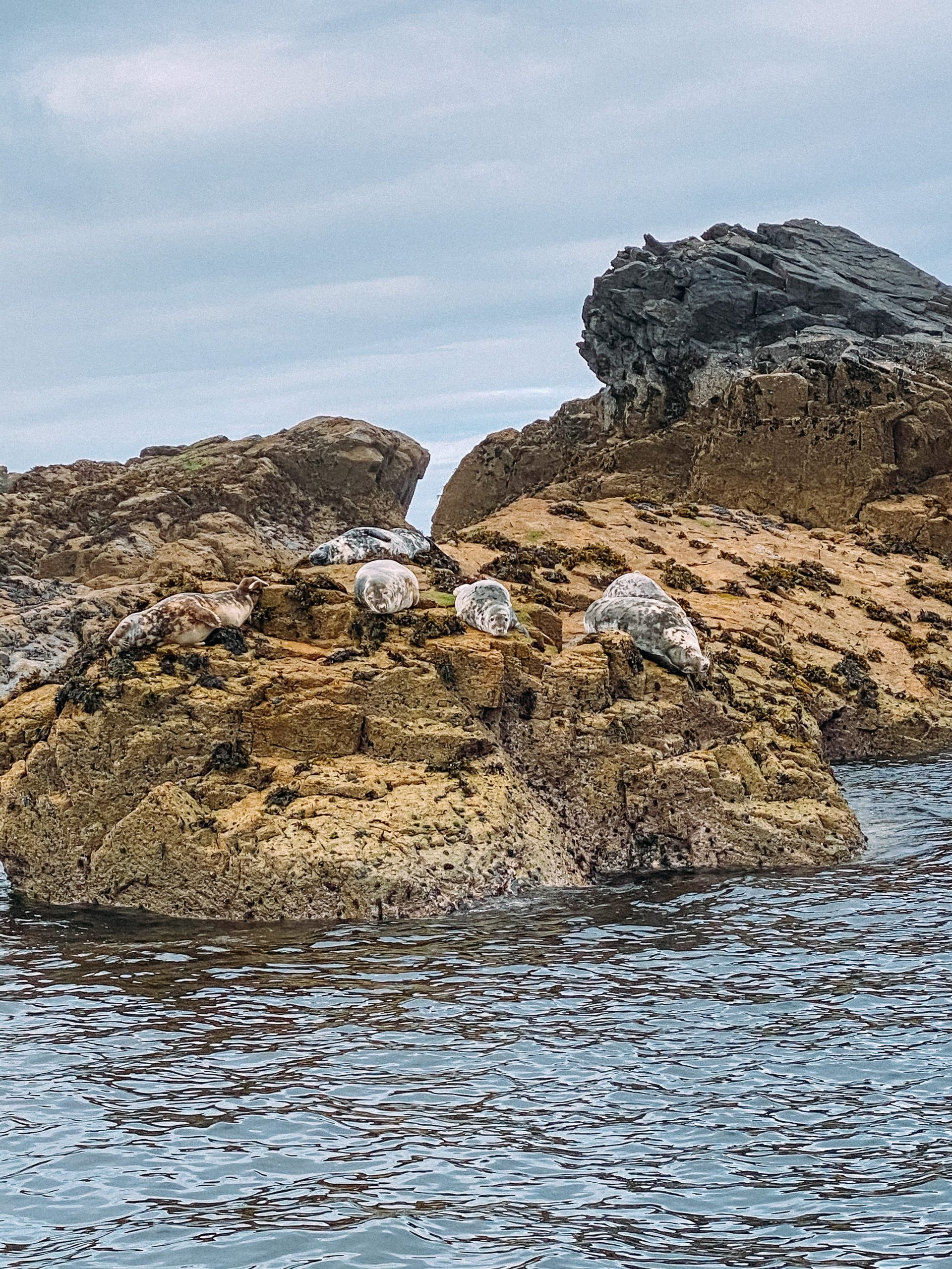Seal Island, Dolly P boat trip, West Cornwall